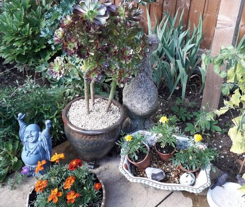 I spent some time yesterday rearranging my pots. Maggie